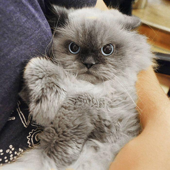 22 gatos odeiam abraços 16