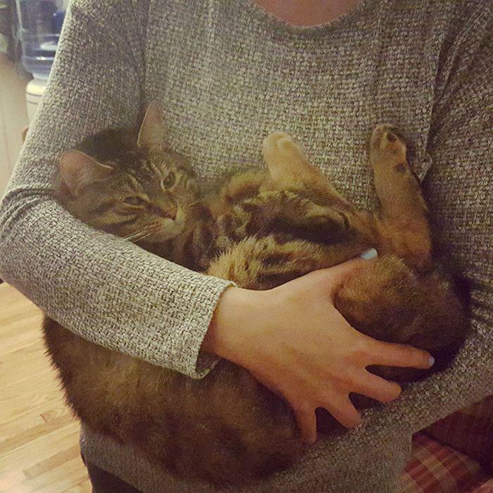22 gatos odeiam abraços 22