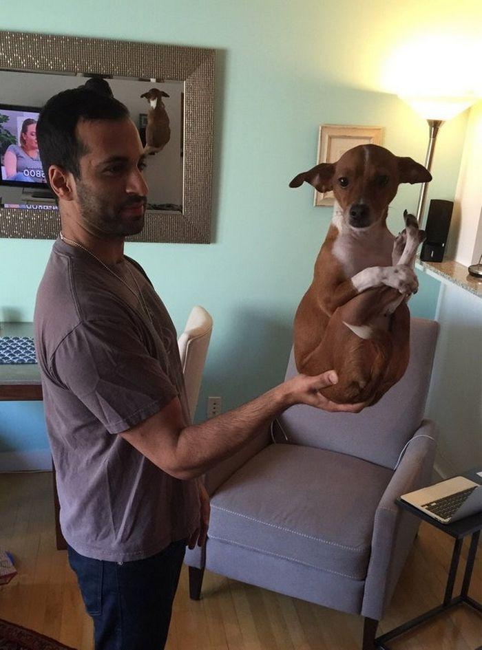 17 animais de estimação com hábitos malucos 8