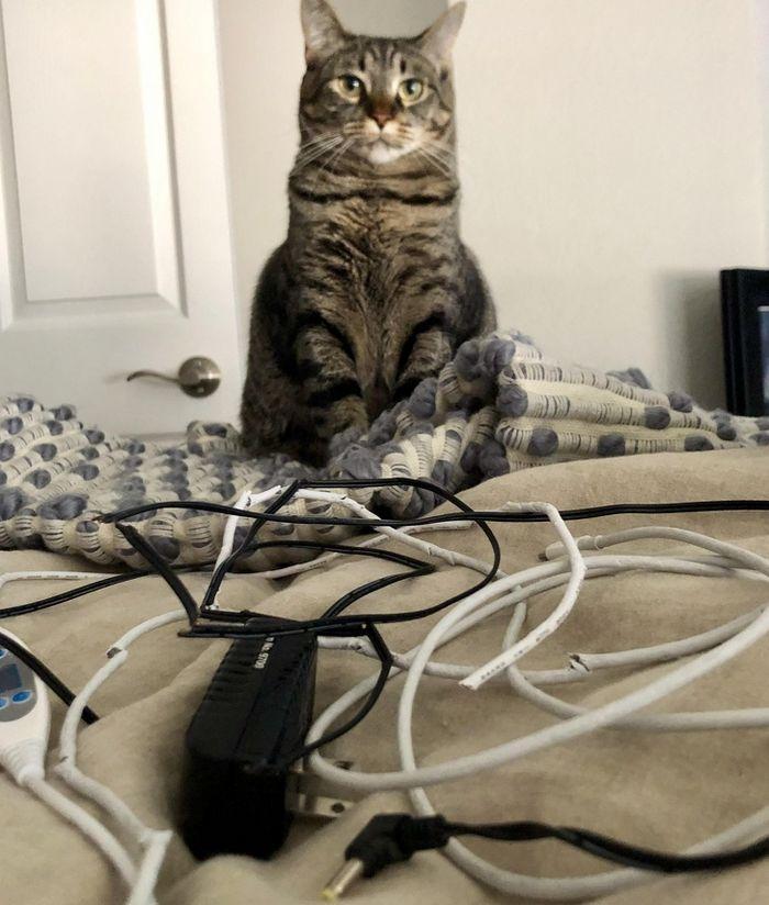 20 gatos que não se incomodam em pedir permissão 3