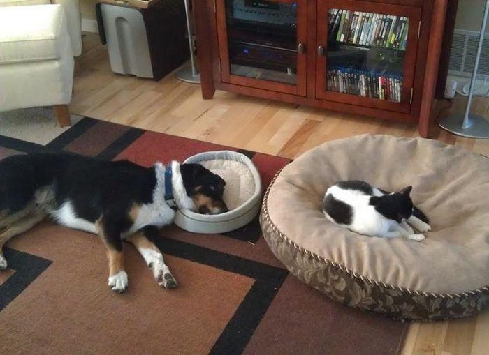 20 gatos que não se incomodam em pedir permissão 7