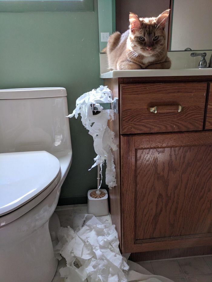 20 gatos que não se incomodam em pedir permissão 8