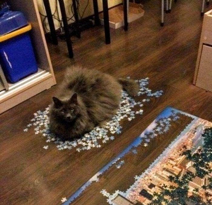 20 gatos que não se incomodam em pedir permissão 9