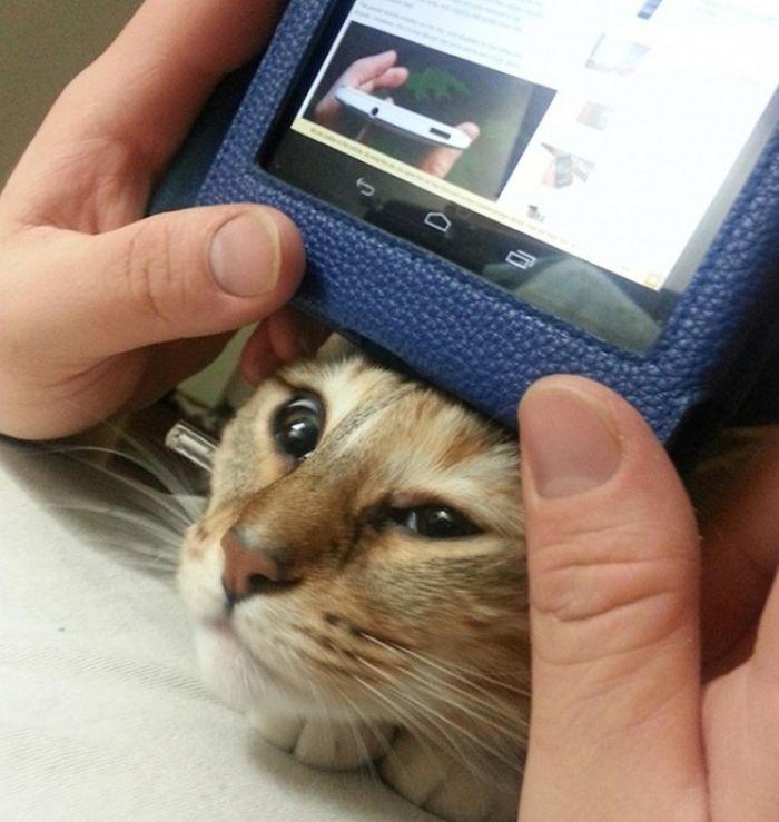 20 gatos que não se incomodam em pedir permissão 11