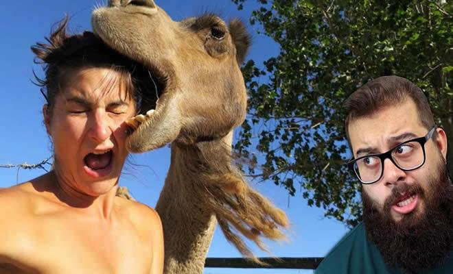Camelos são animais perigosos? Entenda tudo sobre eles! 3