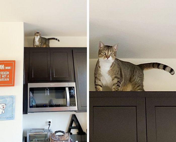 21 coisas que só os donos de gatos vão entender 7