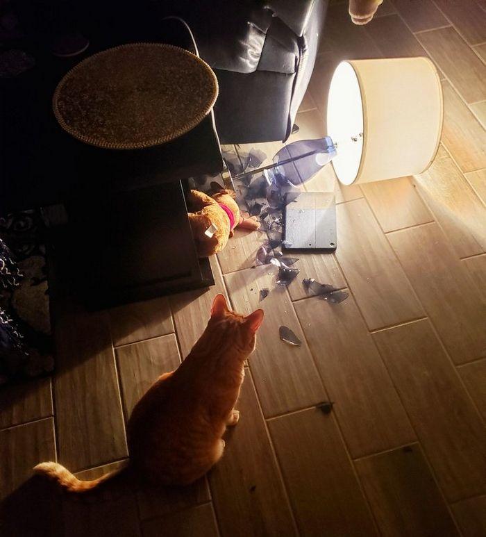21 coisas que só os donos de gatos vão entender 10