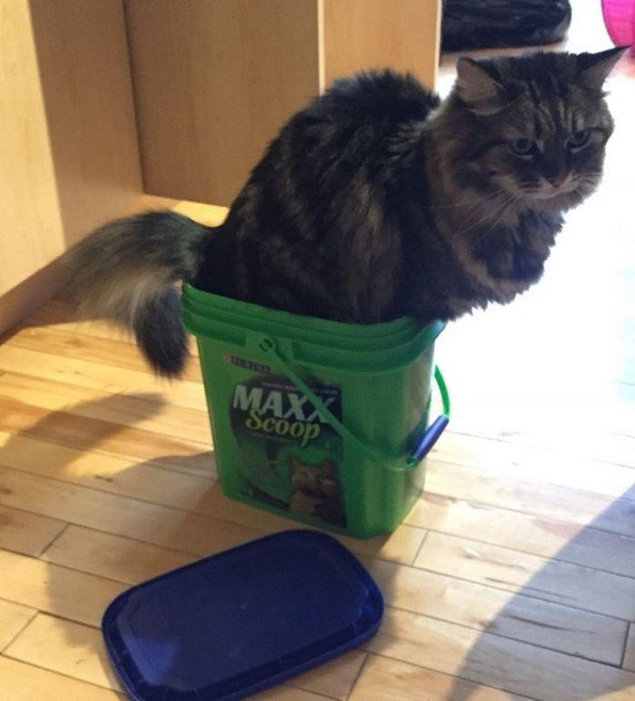 21 coisas que só os donos de gatos vão entender 15
