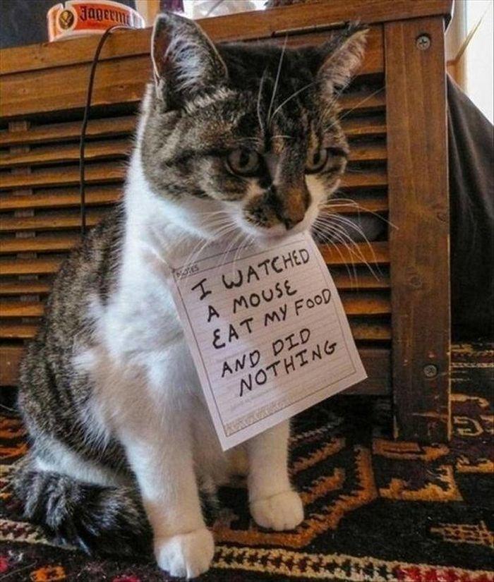 21 coisas que só os donos de gatos vão entender 16