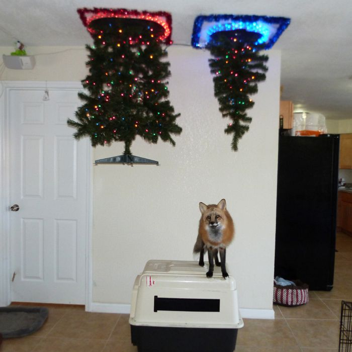 21 dicas genias de como proteger sua árvore de Natal dos animais de estimação 3