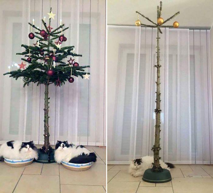 21 dicas genias de como proteger sua árvore de Natal dos animais de estimação 6