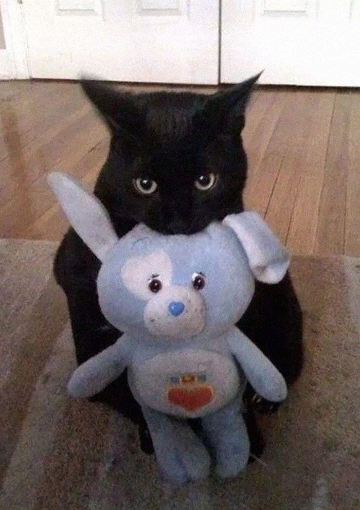 8 fatos que comprova que panteras são apenas gatos gigantes 16
