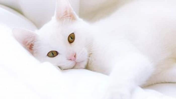 Ideias criativas para nomes para gatos brancos 2
