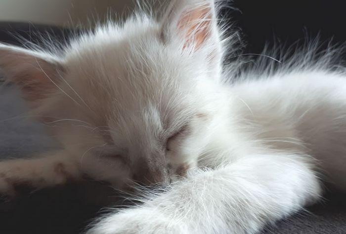 Ideias criativas para nomes para gatos brancos 4