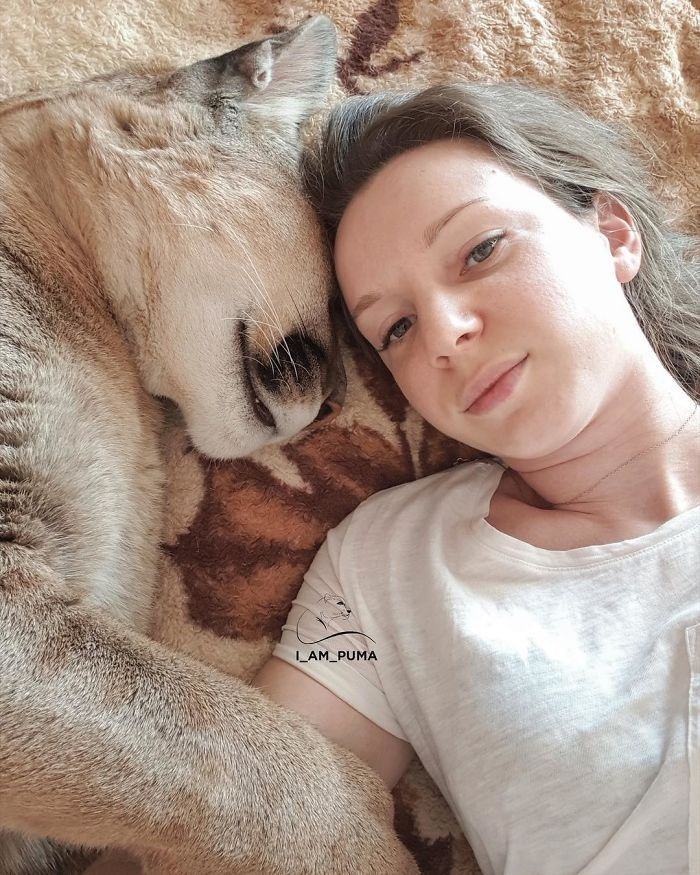 Puma resgatada de um zoológico vive como um gato doméstico mimado (18 fotos) 6