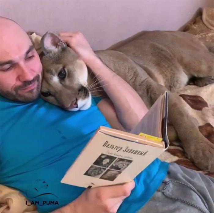 Puma resgatada de um zoológico vive como um gato doméstico mimado (18 fotos) 17