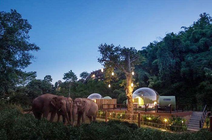 Você pode dormir em uma bolha transparente cercada por elefantes 3