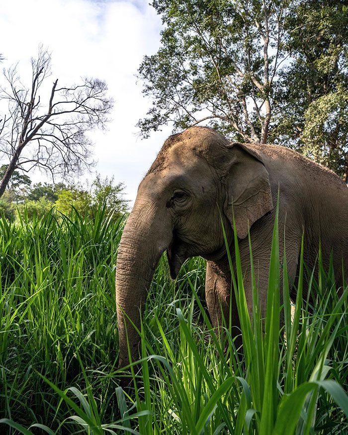 Você pode dormir em uma bolha transparente cercada por elefantes 4