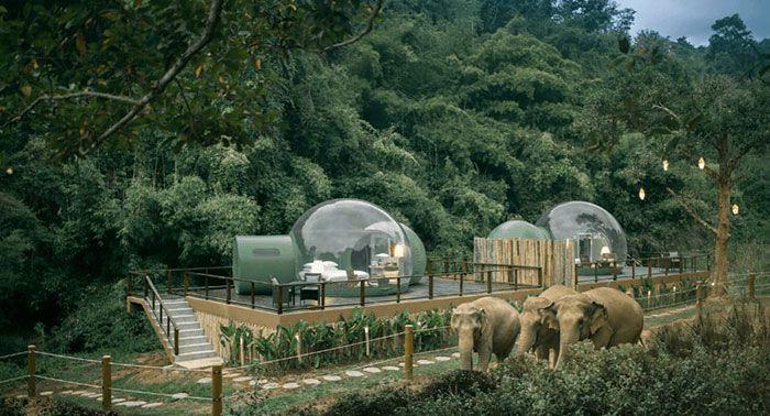 Você pode dormir em uma bolha transparente cercada por elefantes 5