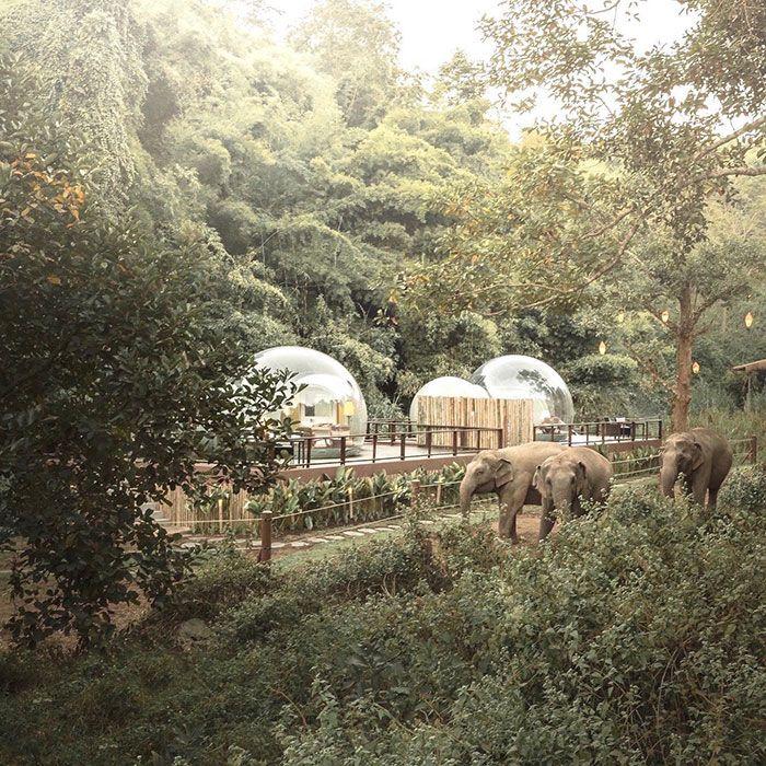 Você pode dormir em uma bolha transparente cercada por elefantes 6