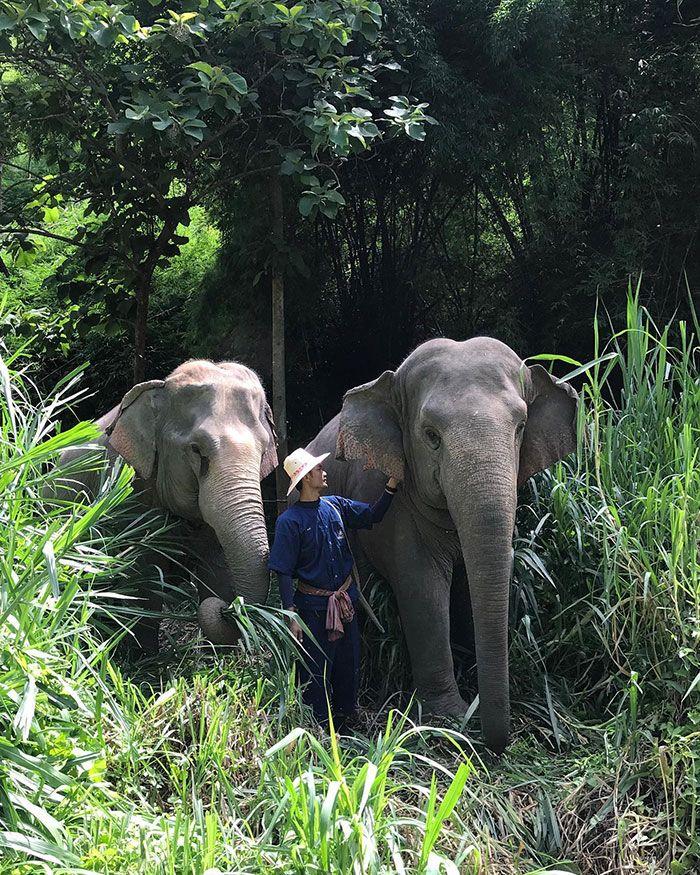 Você pode dormir em uma bolha transparente cercada por elefantes 7