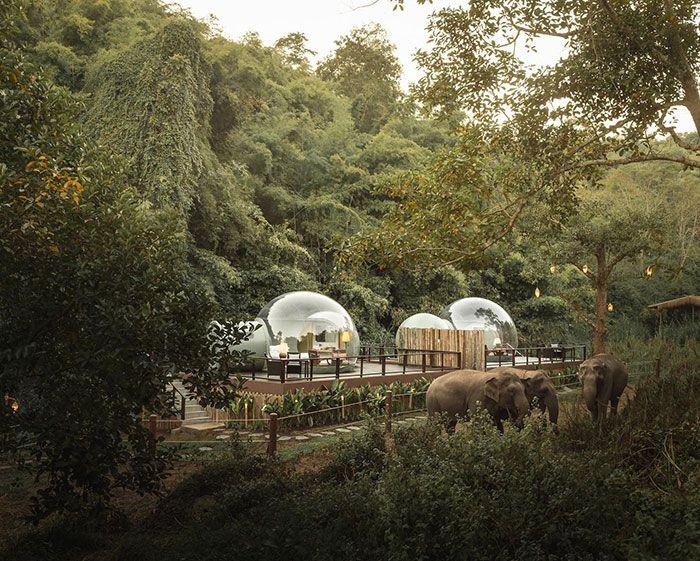Você pode dormir em uma bolha transparente cercada por elefantes 8
