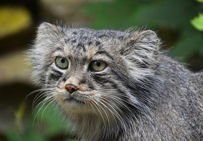 12 animais perigosos que geralmente achamos bonitinhos e indefesos 2