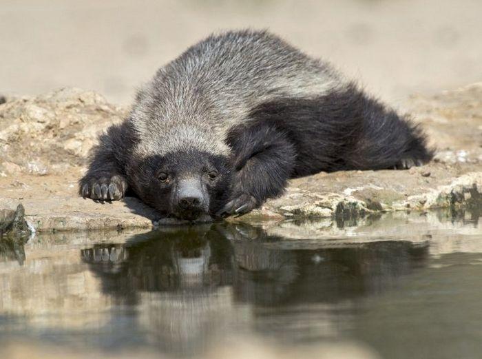 12 animais perigosos que geralmente achamos bonitinhos e indefesos 3