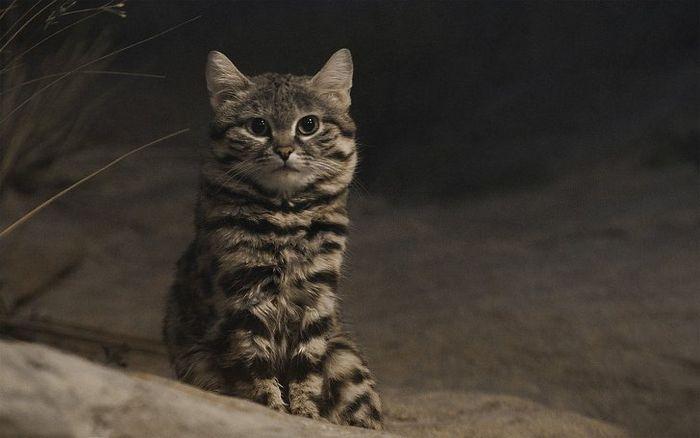 12 animais perigosos que geralmente achamos bonitinhos e indefesos 4