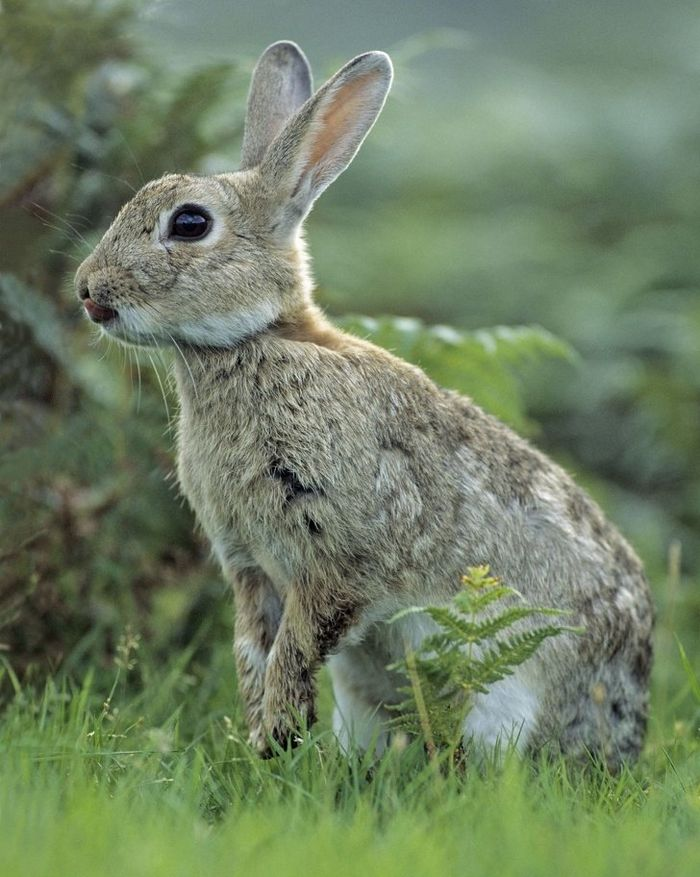 12 animais perigosos que geralmente achamos bonitinhos e indefesos 7