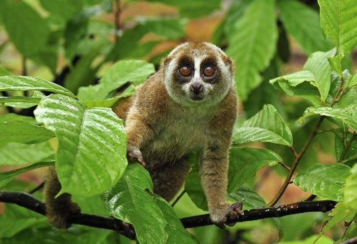 12 animais perigosos que geralmente achamos bonitinhos e indefesos 8