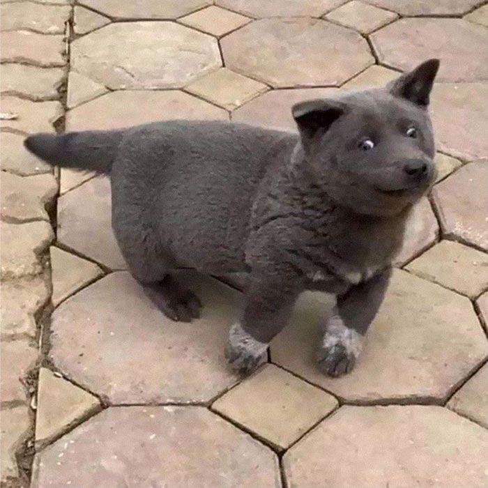 Este cão-gato está conquistando o coração das pessoas por sua aparência 5