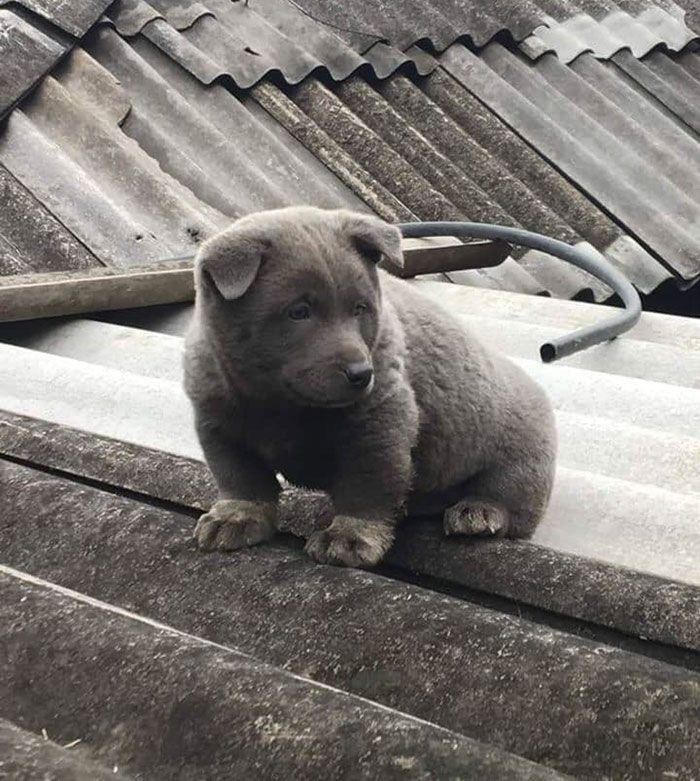 Este cão-gato está conquistando o coração das pessoas por sua aparência 8