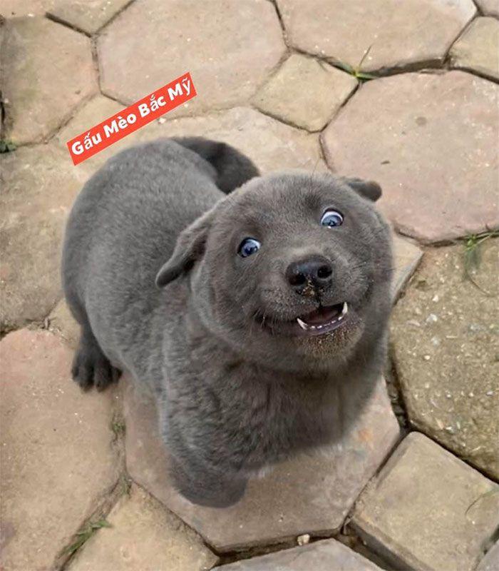 Este cão-gato está conquistando o coração das pessoas por sua aparência 11