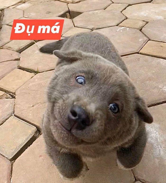 Este cão-gato está conquistando o coração das pessoas por sua aparência 12