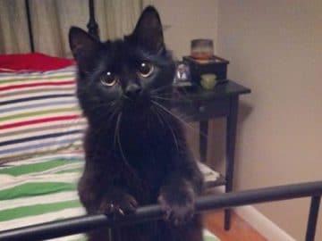 35 adorável gato preto, fotos para mostrar que eles não são má sorte 46