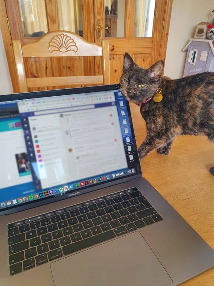 As pessoas estão compartilhando como seus animais de estimação lidam com eles trabalhando em casa 8