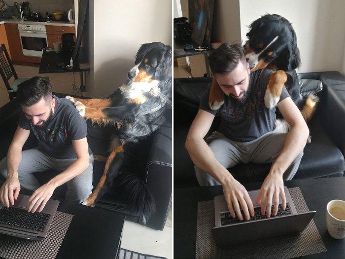 As pessoas estão compartilhando como seus animais de estimação lidam com eles trabalhando em casa 19