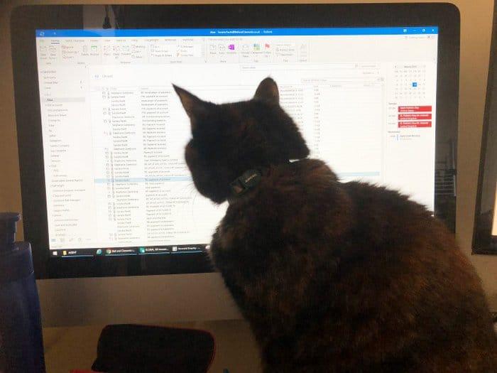 As pessoas estão compartilhando como seus animais de estimação lidam com eles trabalhando em casa 21