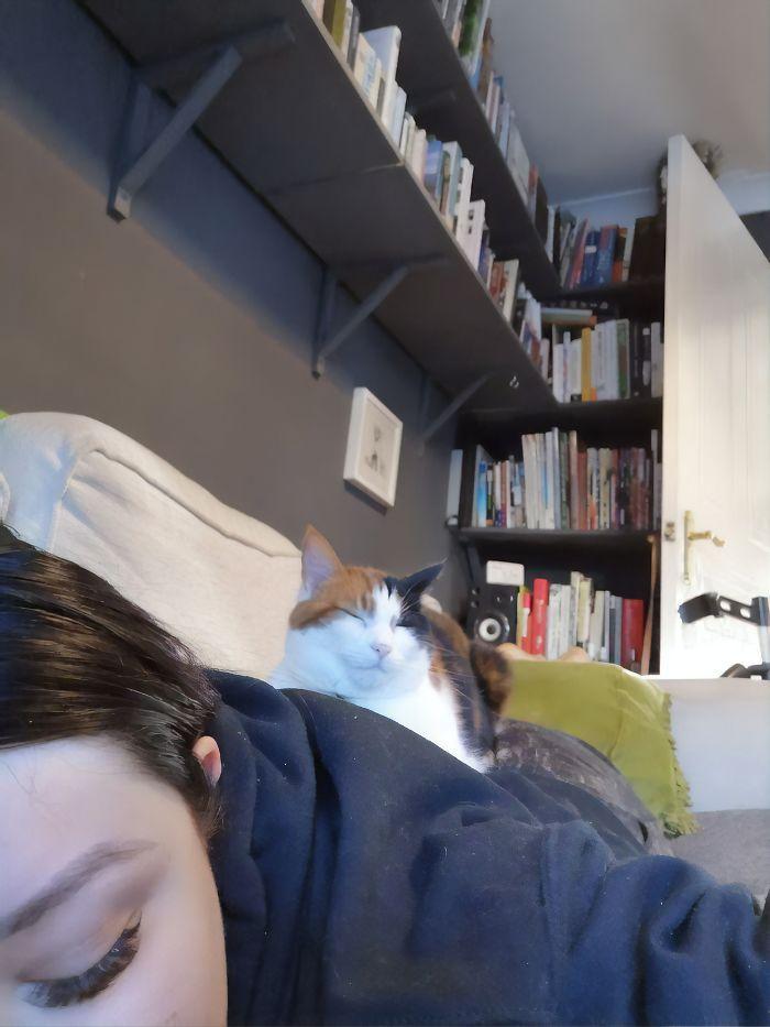 Este gato era super pegajoso, então seus donos a enganaram com um colo falso 5