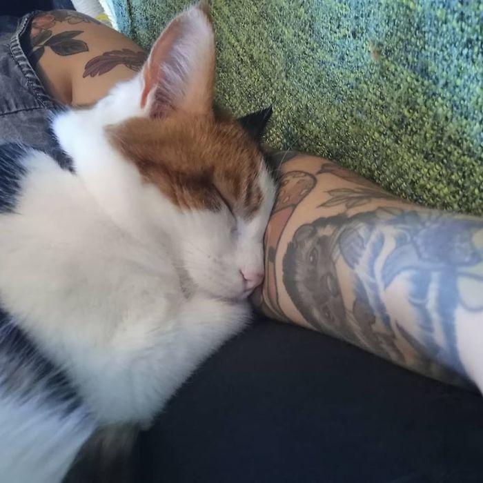 Este gato era super pegajoso, então seus donos a enganaram com um colo falso 6
