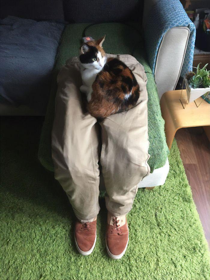 Este gato era super pegajoso, então seus donos a enganaram com um colo falso 10