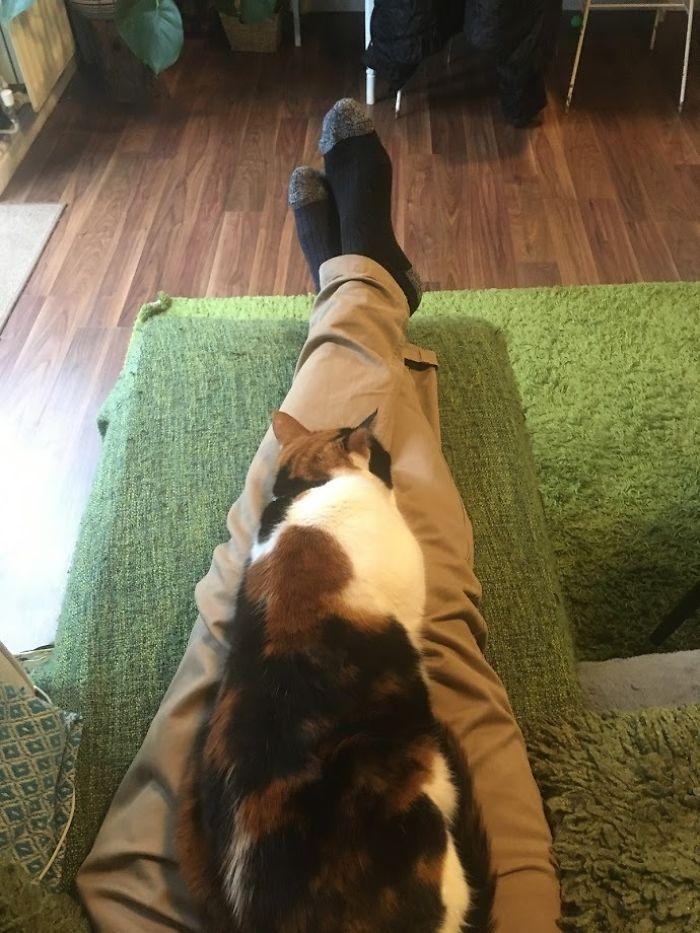 Este gato era super pegajoso, então seus donos a enganaram com um colo falso 11