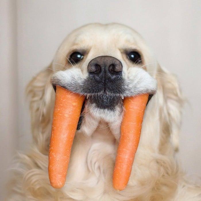 Nova raça de cachorro: O Cão vampiro (21 fotos) 3