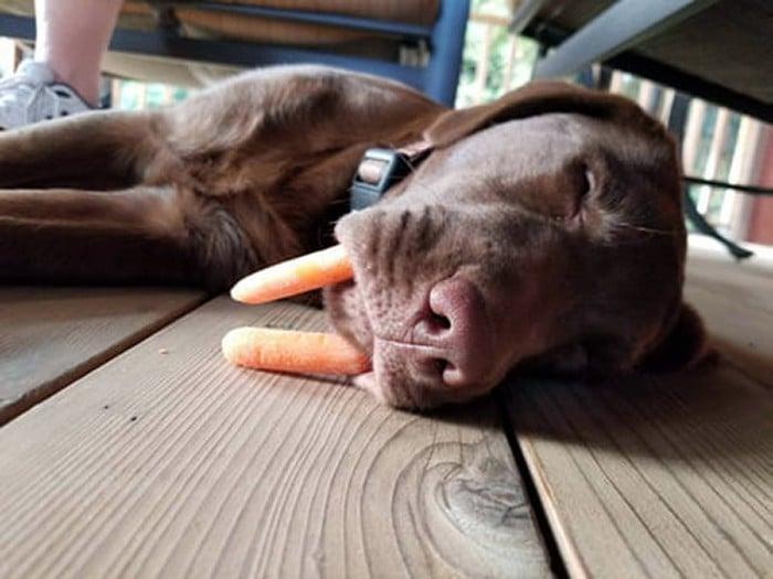 Nova raça de cachorro: O Cão vampiro (21 fotos) 9