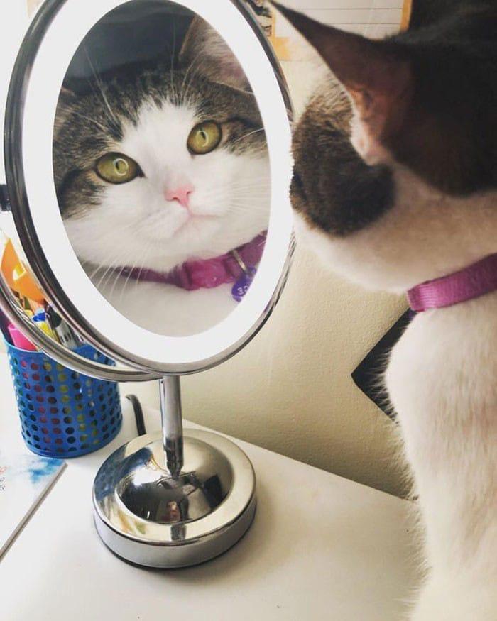 29 animais de estimação que descobriram espelhos 28