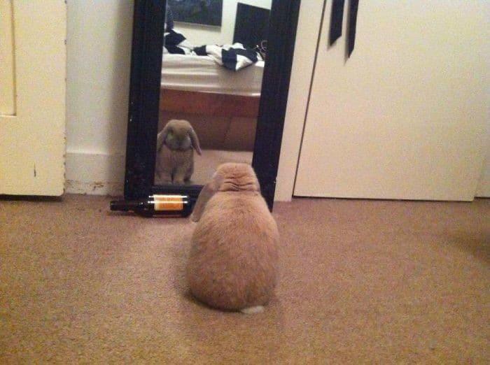 29 animais de estimação que descobriram espelhos 26