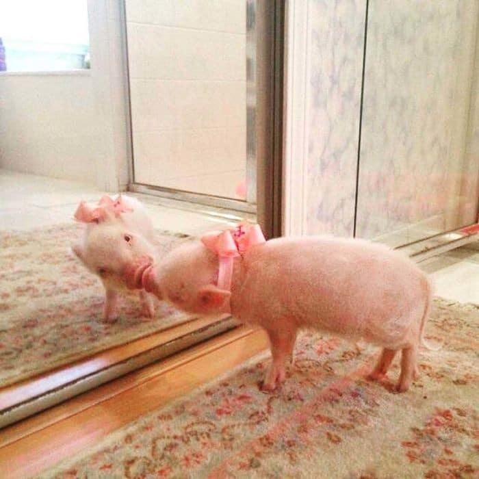 29 animais de estimação que descobriram espelhos 25