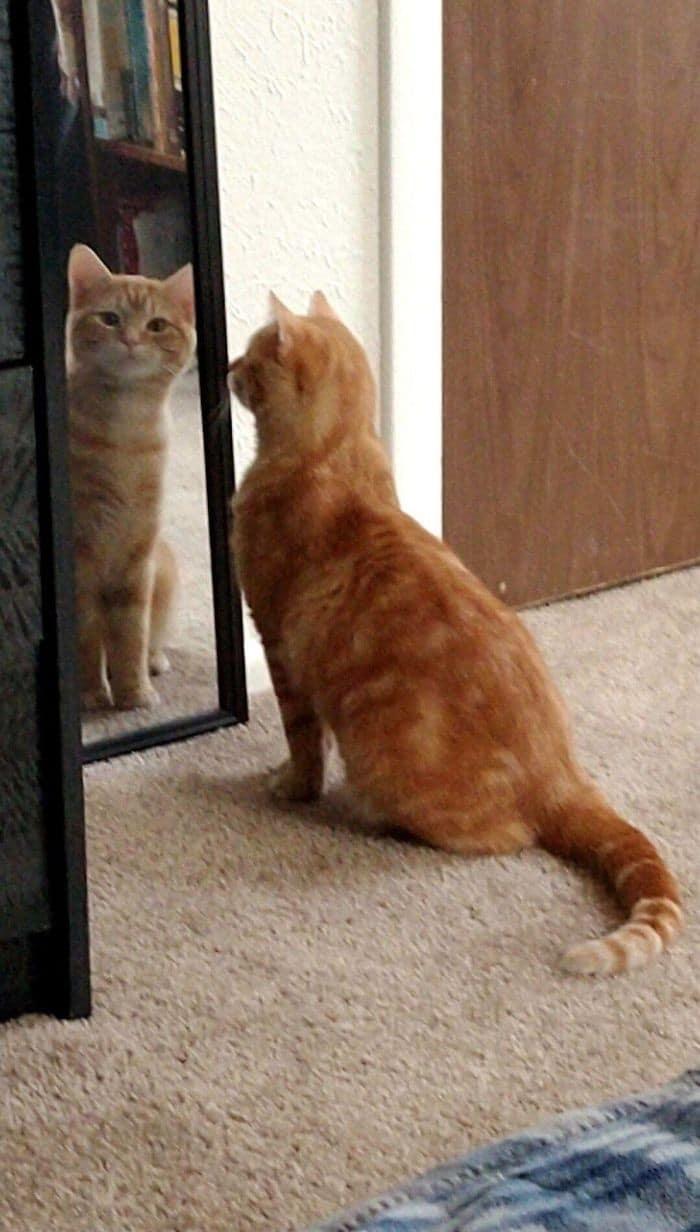 29 animais de estimação que descobriram espelhos 24