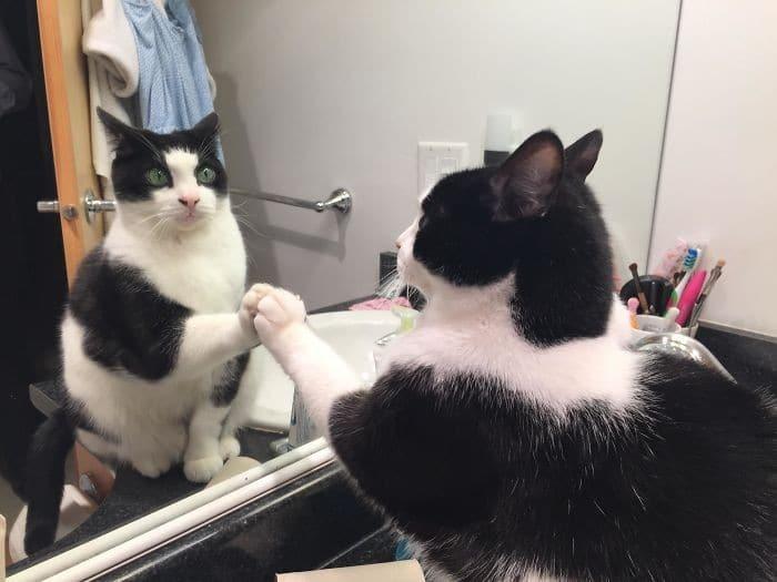 29 animais de estimação que descobriram espelhos 23
